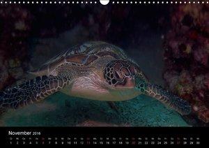 Wunderwelt Unterwasser (Wandkalender 2016 DIN A3 quer)