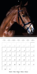 BEAUTIFUL HORSES (Wall Calendar 2015 300 × 300 mm Square)