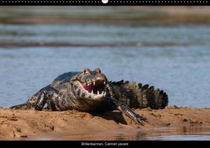 Tiere des Pantanal (PosterbuchDIN A2 quer)