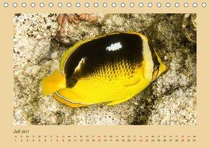 Unterwasserwelt Hawaii (Tischkalender 2017 DIN A5 quer)