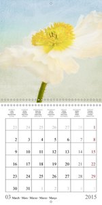Colorful Poppies (Wall Calendar 2015 300 × 300 mm Square)