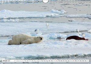 Springer, H: Eisbären - Könige der Arktis (Wandkalender 2015