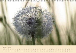 Doberstein, J: Unscheinbare Schönheit - Pusteblume (Wandkale
