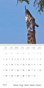 Giraffes - The Graces of Africa (Wall Calendar 2015 300 &times 3