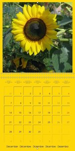 Looking at the Sun (Wall Calendar 2015 300 × 300 mm Square)