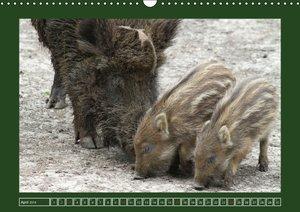 Schweinkram - Die Wildschweine sind los (Wandkalender 2016 DIN A