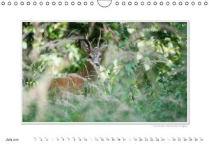 Emotional Moments: Wild local animals / UK-Version (Wall Calenda