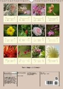 Schumann, B: Flower Shapes / UK-Version