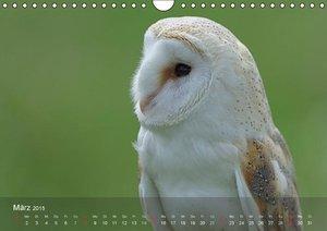 Wolf, G: Eulen-Kalender (Wandkalender 2015 DIN A4 quer)
