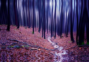 Premium Textil-Leinwand 45 cm x 30 cm quer Buchenwald im Herbst