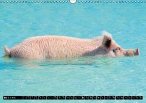 The Swimming Pigs of Bahamas (Wall Calendar 2015 DIN A3 Landscap