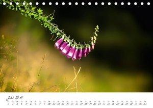 Einfach nur Natur (Tischkalender 2017 DIN A5 quer)