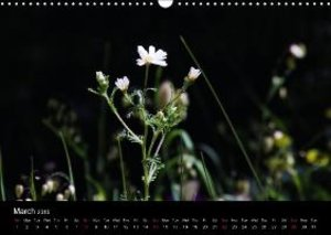 Special Moments (Wall Calendar 2015 DIN A3 Landscape)