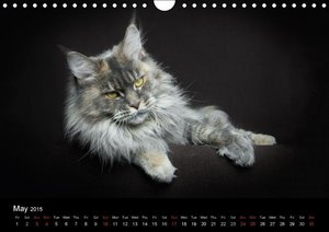 Maine Coon (Wall Calendar 2015 DIN A4 Landscape)