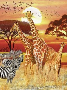 Afrikanischer Sonnenuntergang. Puzzle 1500 Teile
