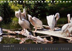 WunderschöneTierwelt (Tischkalender 2017 DIN A5 quer)