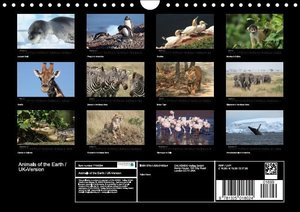 Brack, R: Animals of the Earth / UK-Version