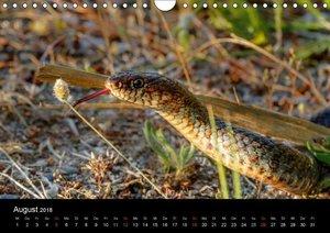 Reptilienkalender 2018