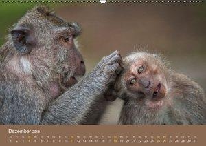 Ich glaub mich laust der Affe (Wandkalender 2016 DIN A2 quer)