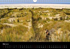 Borkum (Wandkalender 2016 DIN A4 quer)