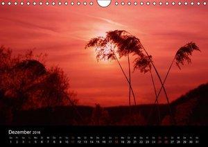 Lichter der Natur (Wandkalender 2016 DIN A4 quer)