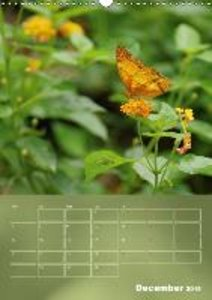Delicate Beauties Exotic Butterflies (Wall Calendar 2015 DIN A3