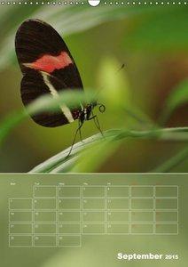 Delicate Beauties Exotic Butterflies (Wall Calendar 2015 DIN A3