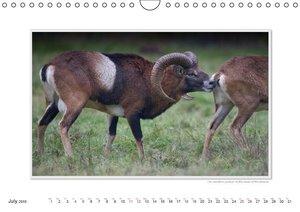 Emotional Moments: Wild Animal Sex. UK-Version (Wall Calendar 20