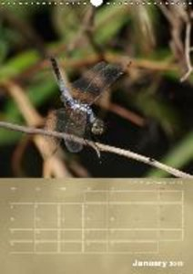 Delicate Beauties - Dragonflies of the Malay Peninsula (Wall Cal