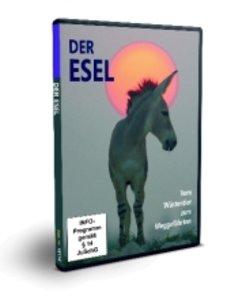 Der Esel-vom Wüstentier z.Weggefährt.
