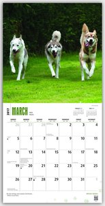 Siberian Huskies - Sibirische Huskies 2017 - 18-Monatskalender m