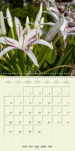 most beautiful plants of Hawai\'i (Wall Calendar 2015 300 × 300