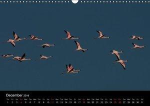 African Birds (UK-Version) (Wall Calendar 2016 DIN A3 Landscape)