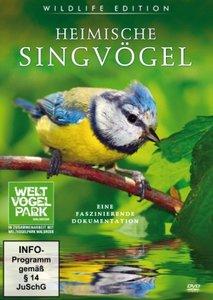 Heimische Singvögel