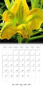 Laube, L: Nature's Yellow Costume