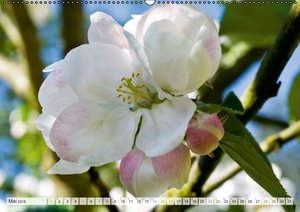 Äpfel (Wandkalender 2016 DIN A2 quer)