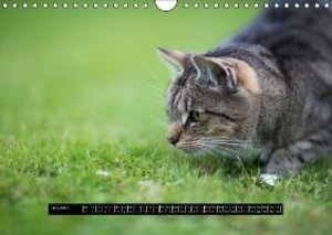 personalities with fur - scenes from the life of two tabby tomca
