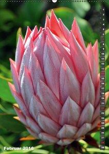 Wilde Flora - Hawaii (Wandkalender 2016 DIN A2 hoch)