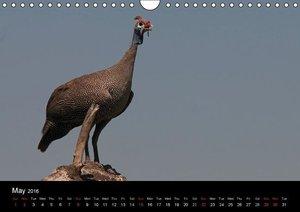 African Birds (UK-Version) (Wall Calendar 2016 DIN A4 Landscape)