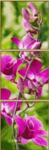 Schipper 609470739 - Orchideenrispe Tripyichon, Malen nach Zahle