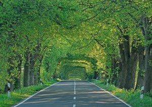 Der Weg ist das Ziel - Alleen (Posterbuch DIN A4 quer)