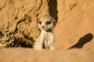 Wächter der Wüste