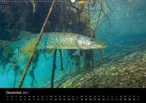 Krebs und Hecht - Ritter und Räuber unserer Seen