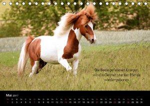Passion - Pferde und Ponys