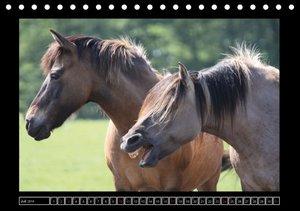 Dülmener Wildpferde (Tischkalender 2016 DIN A5 quer)