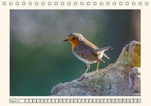 Pötsch, R: Gefiederte Schönheiten - Das Rotkehlchen (Tischka