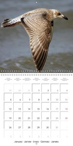 Lovely Seagulls (Wall Calendar 2015 300 × 300 mm Square)