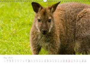 eye contact - animal portraits / UK-Version (Wall Calendar 2015
