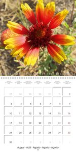 Wild flowers from around the world (Wall Calendar 2015 300 × 300