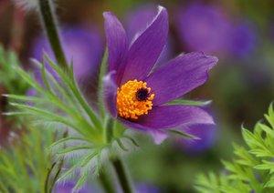 Blumige Brise - Visuelle Poesie der Blumen (Posterbuch DIN A4 qu